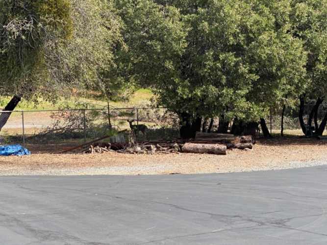 10372 Tabeaud Road, Pine Grove, CA 95665