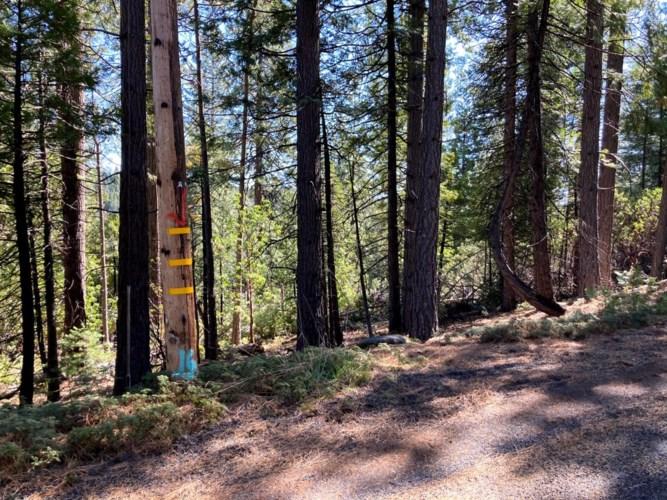 26584 Spring Road, Pioneer, CA 95666