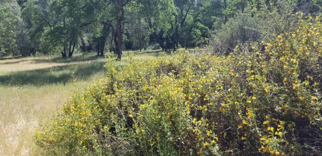 6865 China Diggins Road, El Dorado Hills, CA 95762