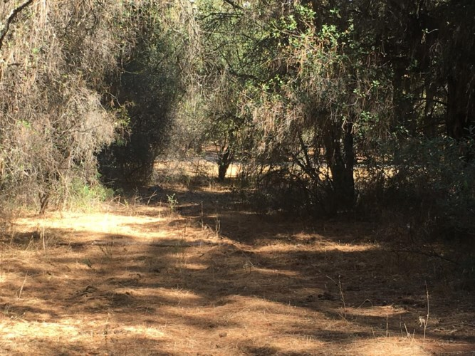 20922 Spring Ranches Road, Grass Valley, CA 95949