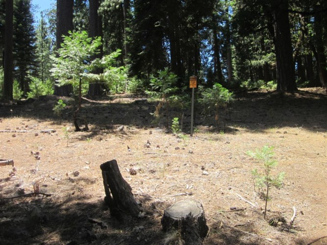 6831 TYLER Drive, Grizzly Flats, CA 95636