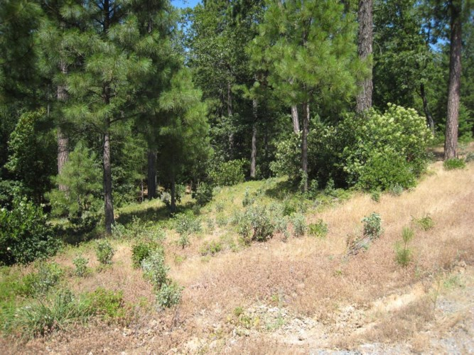 22090 Alton Trail, Foresthill, CA 95631