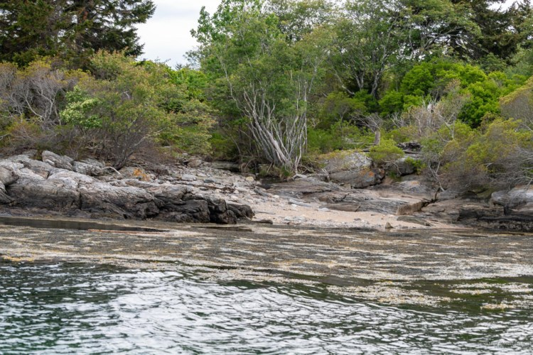 Lot 3 Big Wood Island (Casco Bay) Island, Phippsburg, ME 04562