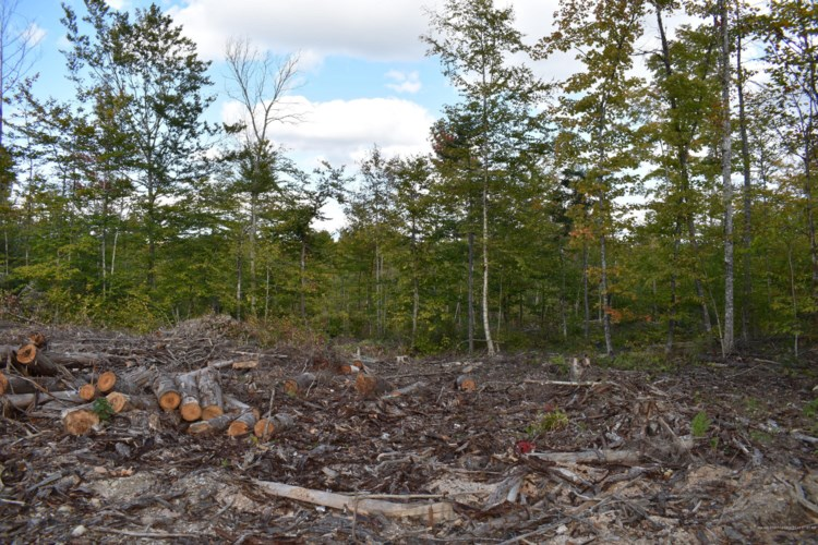 27.4 Acres Mill Hill Road, Springfield, ME 04487