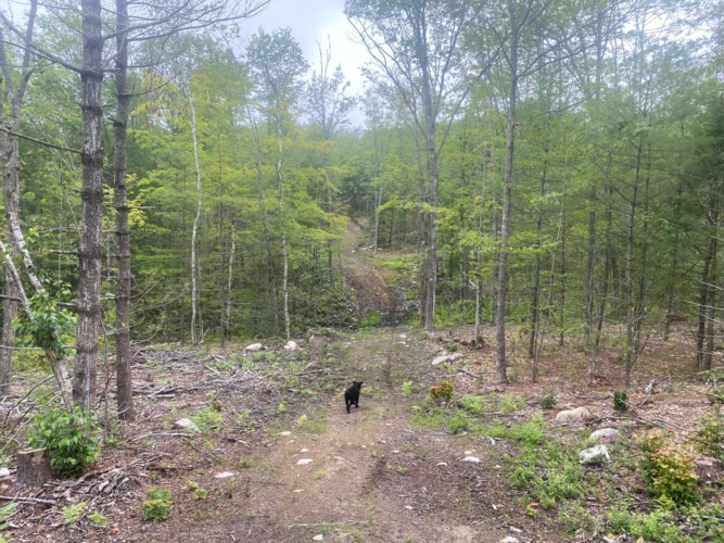 R11 Lot 19 Off Peary Mountain Road, Brownfield, ME 04010