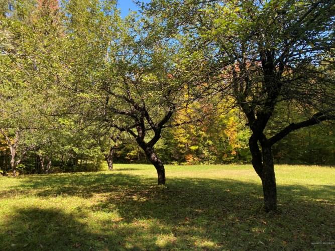 44 Sugar Tree Road, Madawaska, ME 04773