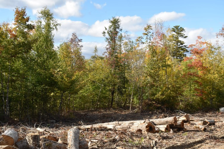 Off Clear Cut Lodge Road, Springfield, ME 04487