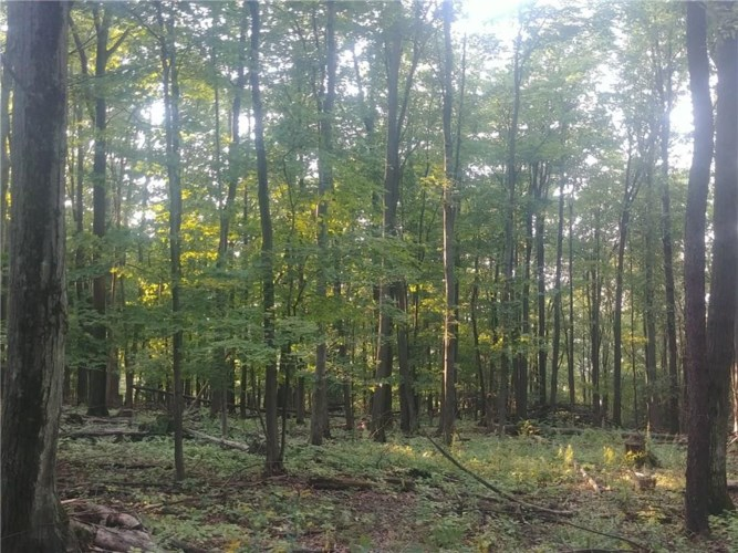 0 Oil Well Hollow Road S, Cohocton, NY 14826