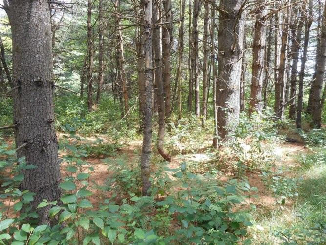 00 Creek Road  #2, Annsville, NY 13471