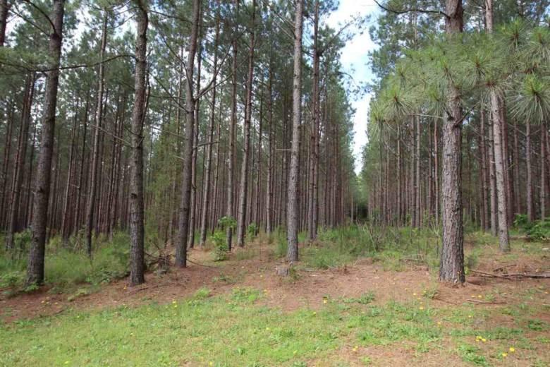 0 Babe Wood Rd, Greer, SC 29650