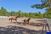 Sierra Vista Ranchos